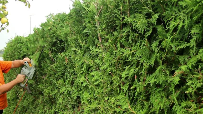 NDIS Hedge Trimmer